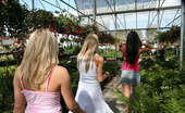 Her First Lesbian Sex Kylee Reese Mariah & Sammie It'S Mariah'S Last Day In Town And Sammie Wants To Make It A Day To Remember. They Don'T Waste Anytime Picking Up A Blooming Blonde At The Local Garden Center. Cum Watch Them Work Up A Sweat Planting Their Lips On Her Rosebuds And Climbing Way Up Into Her