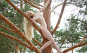Erotic Beauty Olya Alesha In The Trees 2 Playfully Posing In A Tree, Olya Has Some Fun Showing Off Her Tight, Hairy Pussy In The Sun.