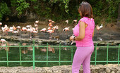 Vanessa Del Feeding The Flamingos At The Zoo!