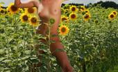 David Nudes Alena Alena Sunflowers Shimmering, Golden, Feeling The Fresh Breeze Caress The Skin......